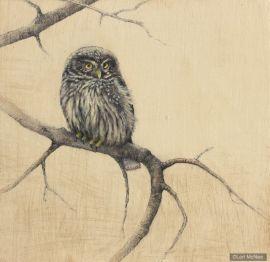©2012 Lori McNee Little Owl 12x12 Graphite on panel