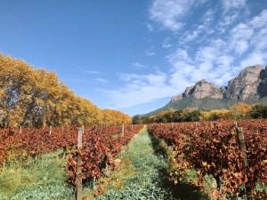 BOSCHENDAL: A FARM FOR ALL SEASONS