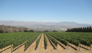View of the Salinas Valley from the Hahn Estate tasting room.