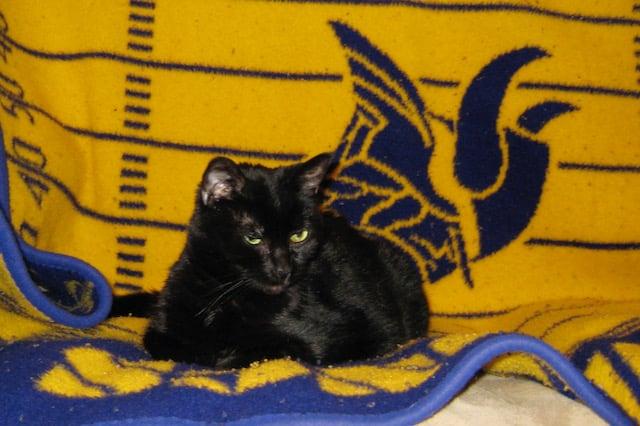 Velvet on a Viking blanket