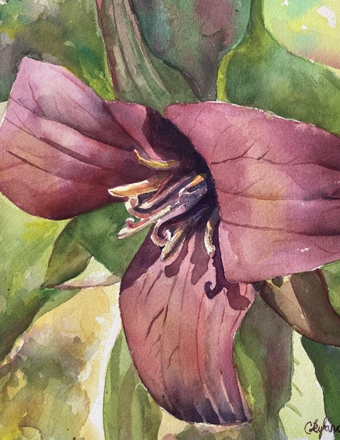 Watercolour of a fuscia flower, by Candice Leyland. Candice makes a living at art.