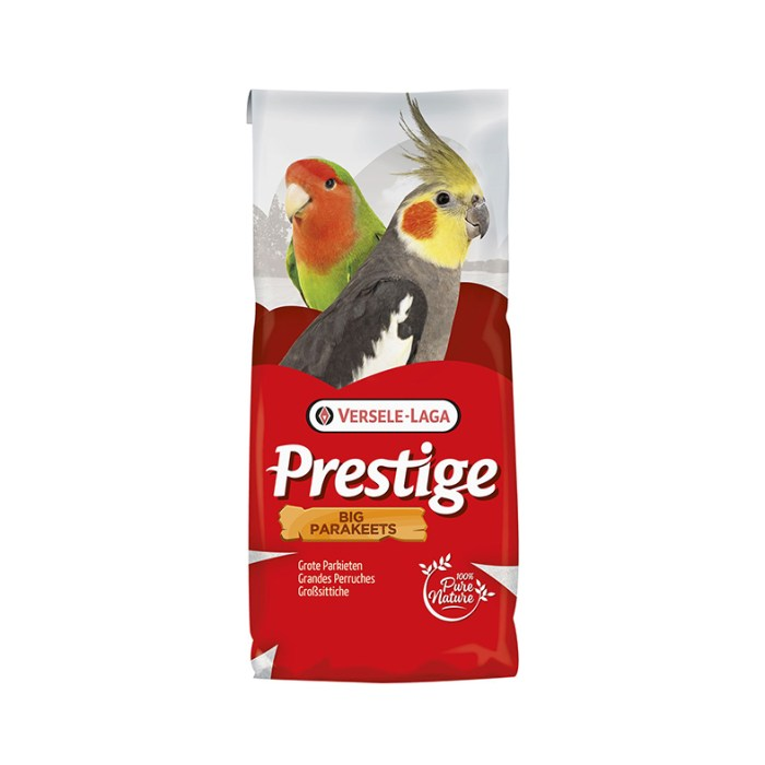 VerseleLaga_prestige big parakeets