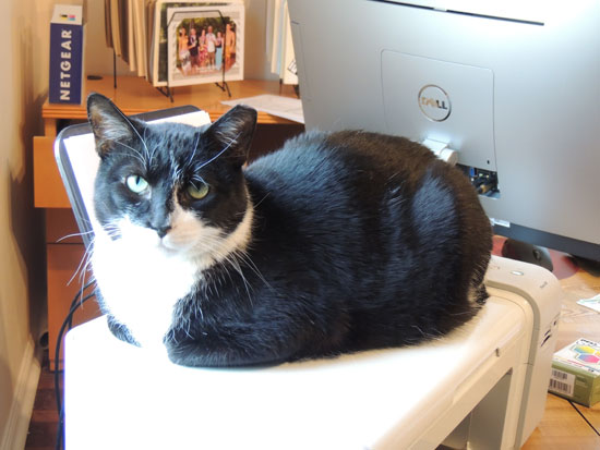 Truman-on-the-printer