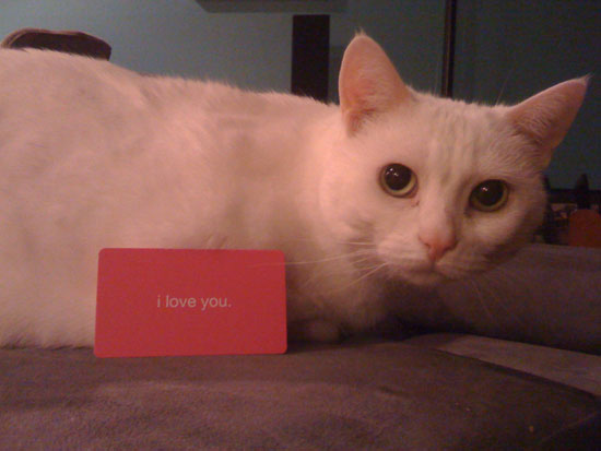 snowball-loves-you