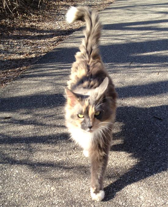 Monon-cat