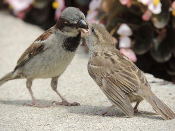 Birds-on-the-Canal