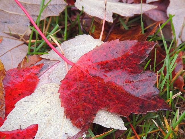 fall-november-1-007