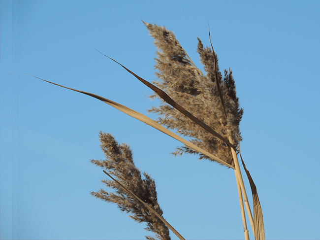 winter-stalks