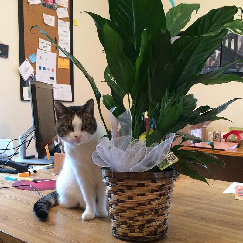 flowers-for-Truman