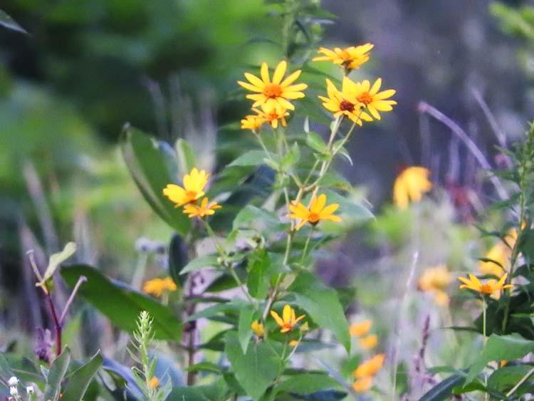 Aug flowers 013