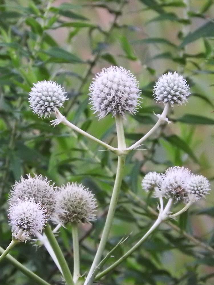Aug flowers 019