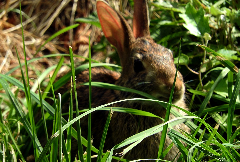 Bunny in the Rhino Pen