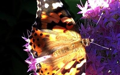 Slow Butterfly
