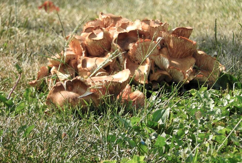 Mushroom?
