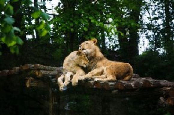 animaux-amoureux-saint-valentin-23