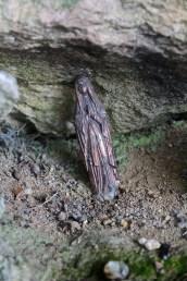 Rehon-Grotte-de-Lourdes-14