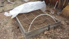 """I laid out a planting grid with string and a staple gun so I can do """"square foot"""" planting"""