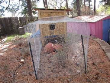 the hardware cloth pen is about 8'x4', not including the 4'x4' area under the coop. There's a broken pot in there that they like to hide under