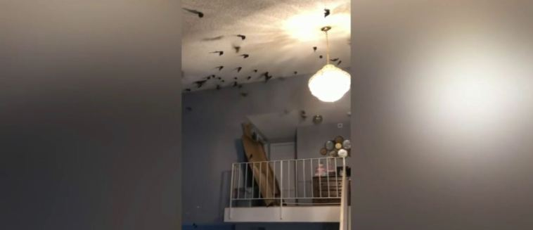'We walked into a nightmare:' Torrance family finds 800 birds in home