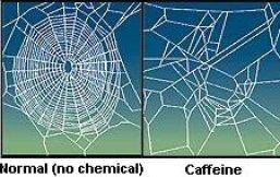 CaffeinatedSpider2