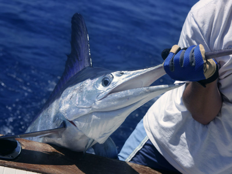 Los Cabos Fishing Boat Rental