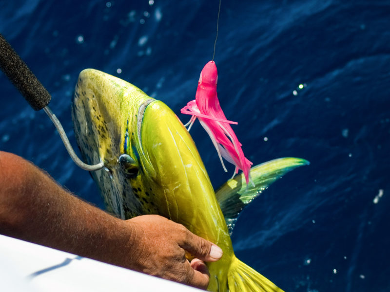Monalisa Fishing Charters