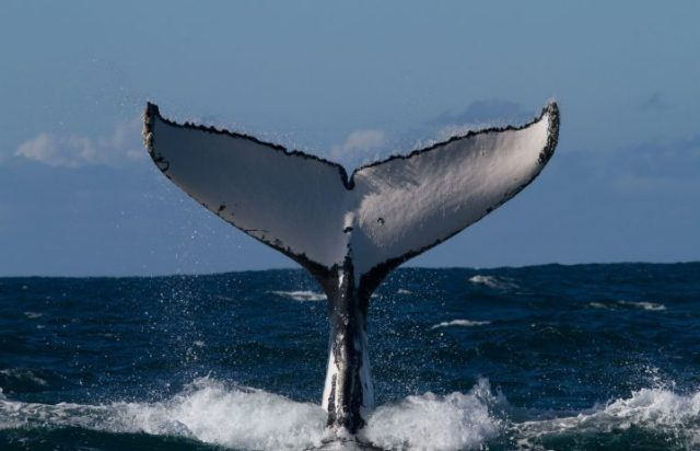 Rancho Tours Whale Watching
