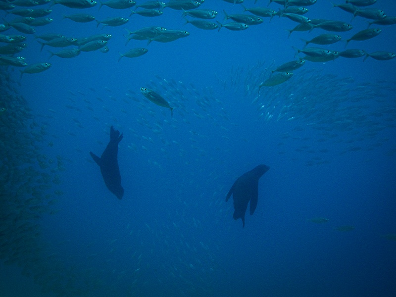 Cabo Trek Private Diving Tour-3
