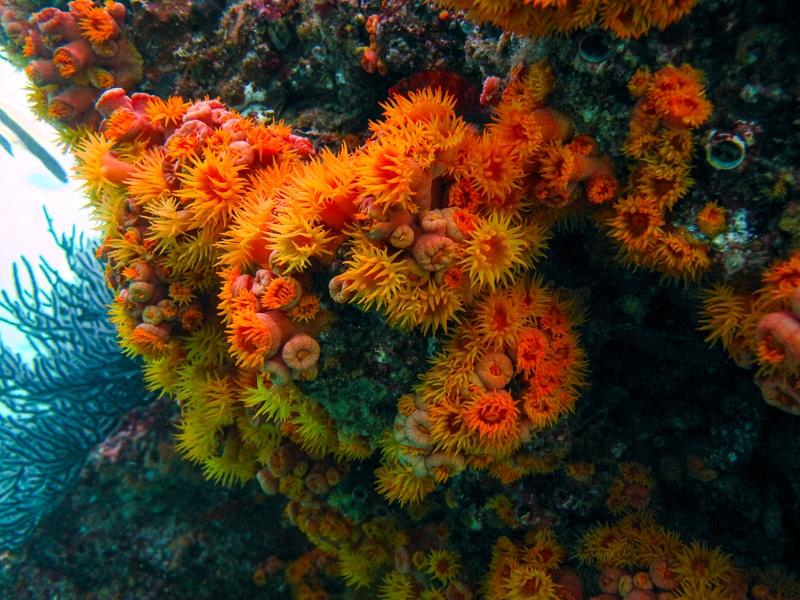 Cabo Trek Private Diving Tour