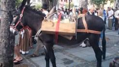 Romería de los Burros - San Benito Abad- La Laguna 2015 (3)