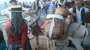 Romería de los Burros - San Benito Abad- La Laguna 2015 (5)