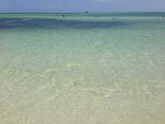 Logger Head Playa Bahia Honda