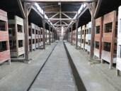 En el interior de las cuadras-barracón. Donde debieran vivir 50 caballos, ahora habitaban 400 personas.