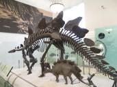 Estegosaurio con estegosaurito