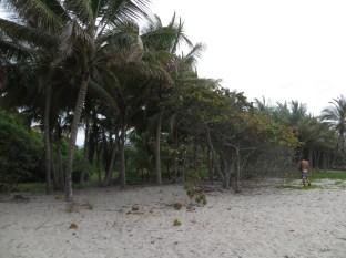 En busca del coco...