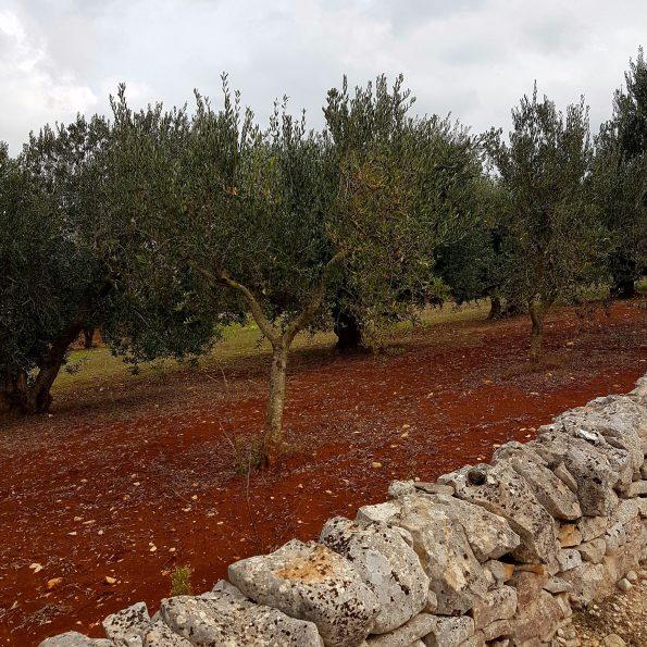 La Puglia, un viaje al sabor del sur de Italia