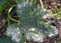 Plagas del Huerto: Los Hongos