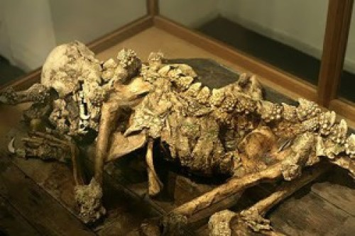 Presunto esqueleto reptiliano localizado en museo japonés.