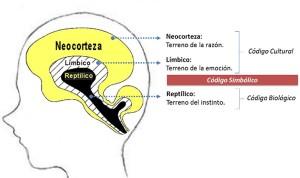 El-cerebro-triple-1