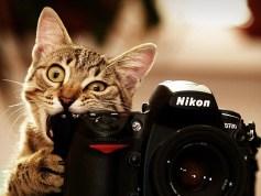 cat-nikon-camera-photographer-nikon-d700-lens-animals-1050x1400