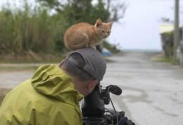 foto-blog-Fotografo-di-animali-fa-amicizia-con-un-gattino-amorevole.4