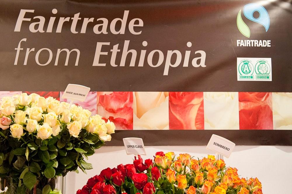 Etiopia, olanda, fiori, agricoltura, floricoltura, export, esportazioni, lavoro, iscos, ong, sviluppo, sfruttamento, serre, crescita, investimenti, economia, donne, empowerment (3)
