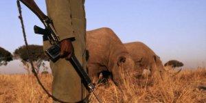 Chi ha ucciso Sudan? Il bracconaggio nell'Africa sub-sahariana