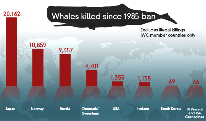 whales-killed-since-1985-data.jpg