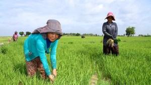 L'economia della Cambogia: tra sviluppo e disuguaglianze