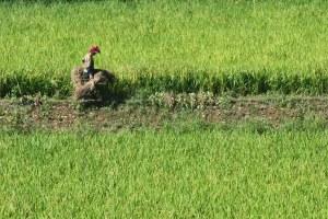 Insicurezza alimentare in Corea del Nord