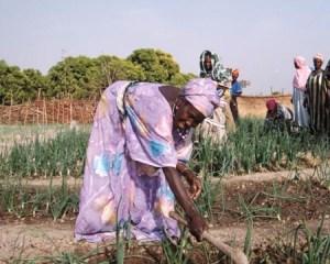 """Lo scontro tra """"Land grabbing"""" e diritti delle comunità"""