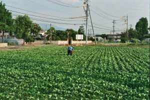 Invecchiamento della popolazione e l'abbandono delle zone rurali in Giappone
