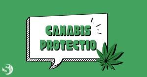 Canabis protectio: intervista a Flavia Pansieri
