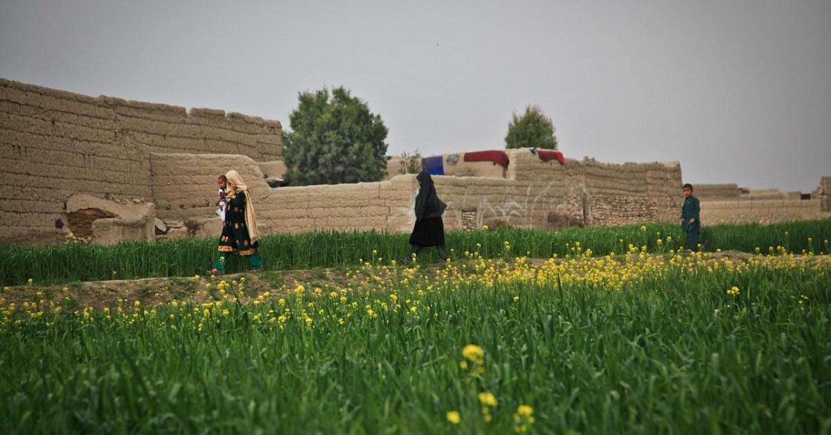Afghanistan donne agricoltura